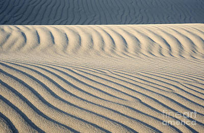 Photograph - Nipomo Dunes by Ronald Hoggard