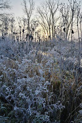 Photograph - Nippersink Creek Frosty Morning by Ray Mathis