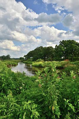Nippersink Creek Photograph - Nippersink Creek Milkweeds by Ray Mathis