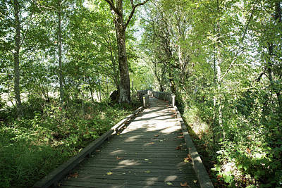 Photograph - Nisqually Boardwalk 1 by Tom Cochran