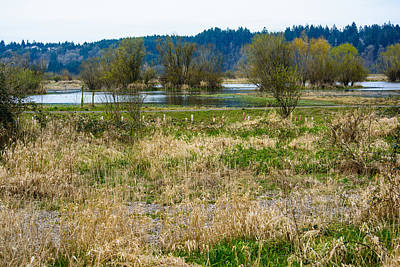 Photograph - Nisqually Wildlife Refuge Delta by Tikvah's Hope