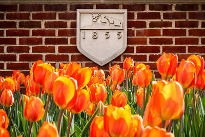 Nittany Tulips Art Print by Phillip Schafer