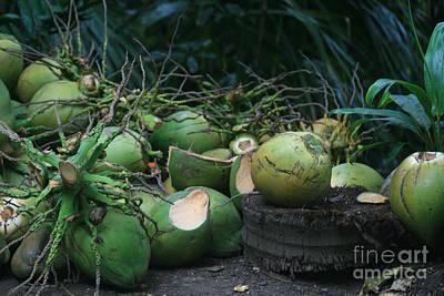 Niu Hawaiian Coconuts Hooululahui Kahekilinui Wailuku Art Print by Sharon Mau