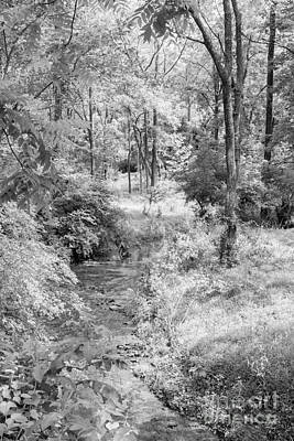 Photograph - Nixon Creek 2 by Chris Scroggins