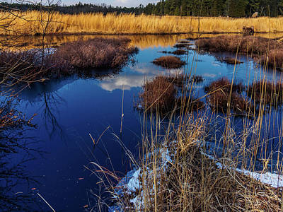 New Jersey Pine Barrens Photograph - Nj Pinelands Savanna Art by Louis Dallara
