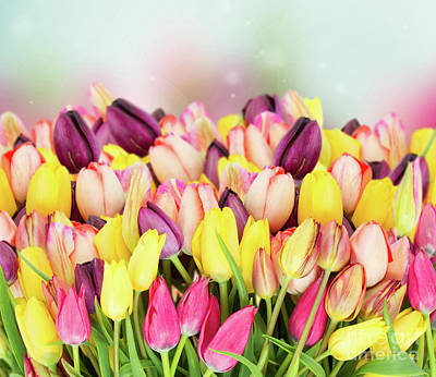 Photograph - Sea Of Tulips by Anastasy Yarmolovich