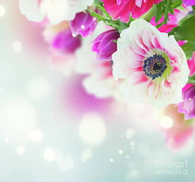 Photograph - Anemone Tenderness by Anastasy Yarmolovich