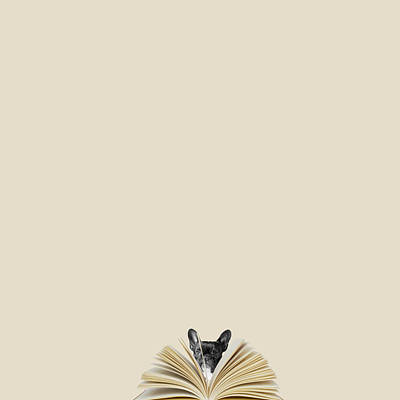 Pug Wall Art - Photograph - No Book No Party by Caterina Theoharidou