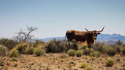 Photograph - No Bull by Glenn DiPaola