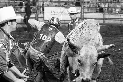 Horse Photograph - No Bull by Steven Bateson
