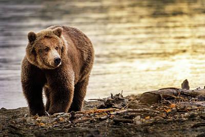 Alaska Photograph - No Escape by Chad Dutson