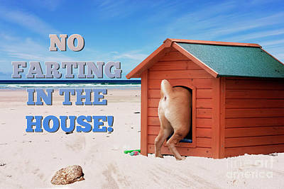 Photograph - No Farting In The House by Terri Waters