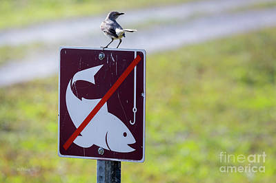Photograph - No Fishing- The Guarding Mockingbird by Rene Triay Photography