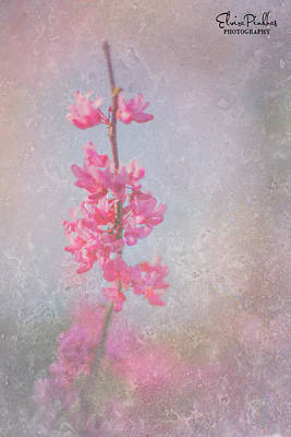 Photograph - No Flower Without Sunshine by Elvira Pinkhas