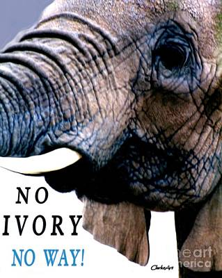 Photograph - No Ivory - No Way by Jean Clarke