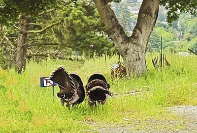 Photograph - No Parking Wild Turkeys by Joyce Dickens