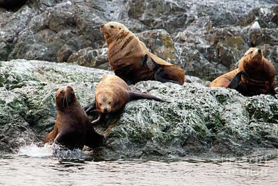 Sea Lion Photograph - No Room by Mike Dawson