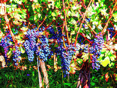 Photograph - No Sour Grapes Here by Leslie Montgomery