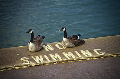 Photograph - No Swimming by Daniel Houghton