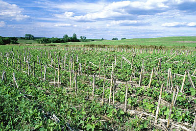 Good Practices Photograph - No-till Soybean Field by Inga Spence