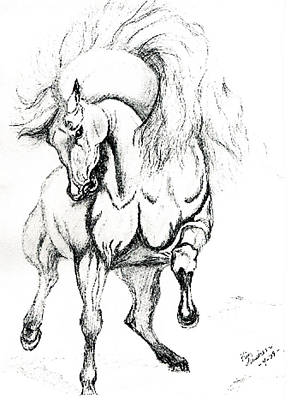 Noble Stallion Art Print by Kim Souza