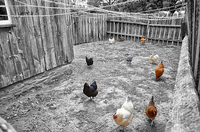 Nobody Here But Us Chickens Art Print by Bill Cannon