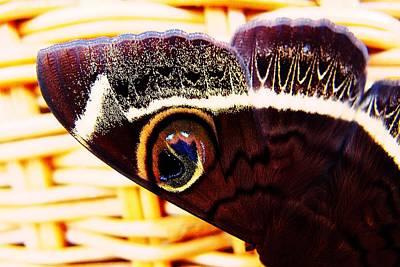 Photograph - Noctua Troglodyta by Dora Hathazi Mendes