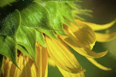 Photograph - Nodding Yellow Sunflower by Kathy Clark