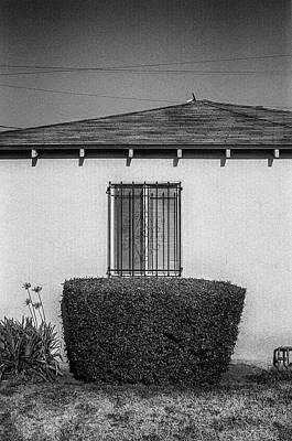Photograph - Noho Shrub Window by YoPedro