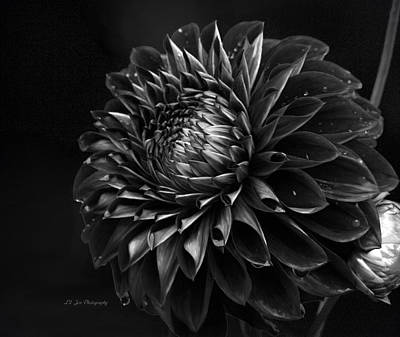 Photograph - Noir Beauty by Jeanette C Landstrom