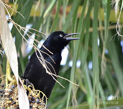 Photograph - Noisy Bird by Debby Pueschel