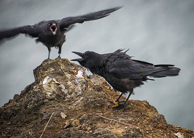 Photograph - Noisy Crows by Robert Potts