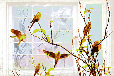 Quaker Parrot Photograph - Noisy Quakers by Olivia Novak