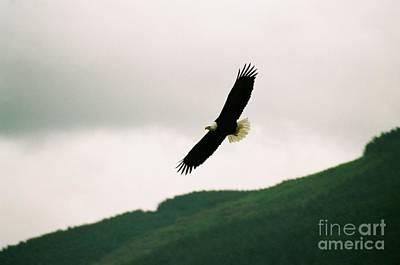 Nooksack Eagle Art Print by Brent Easley