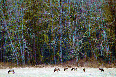 Photograph - Nooksack Herd by Brian O'Kelly