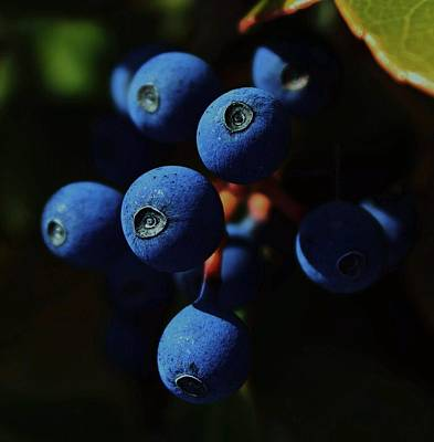 Blueberry Photograph - Noon by Amy Neal
