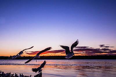 Photograph - Noosa Gulls by Robert Munden
