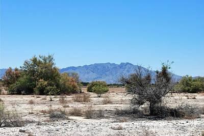 Photograph - Nopah Range Desert Plants Landscape by Matt Harang