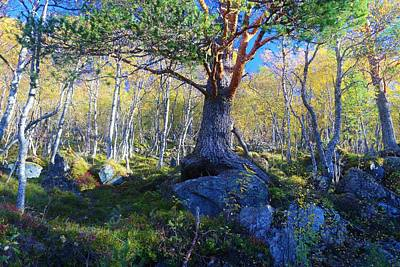 Curated Travel Chargers - Nordic Autumn Forest Pine by David Broome