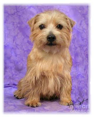 Pup Digital Art - Norfolk Terrier Pup by Maxine Bochnia