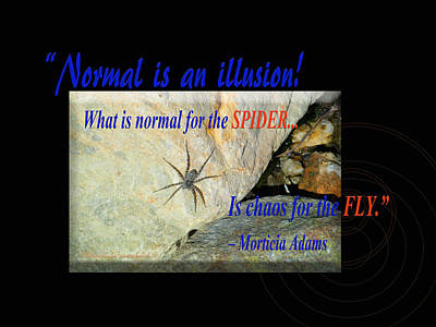 Photograph - Normal Is An Illusionwhat Is Normal For The Spider Is Chaos For by Tamara Kulish