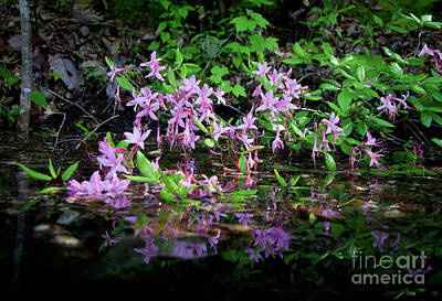 Photograph - Norris Lake Floral 2 by Douglas Stucky