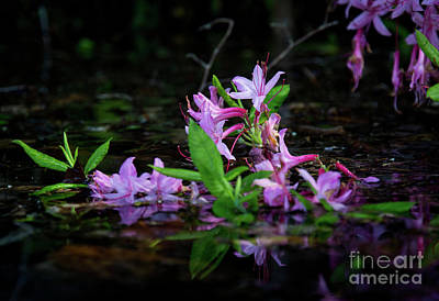 Photograph - Norris Lake Floral by Douglas Stucky