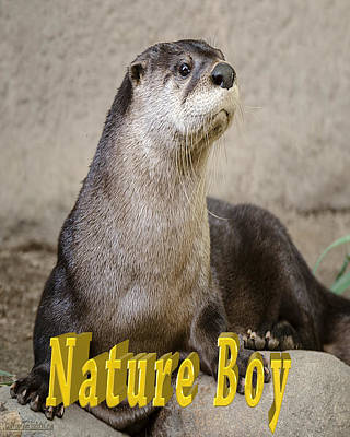 Nature Boy Photograph - North American Otter Nature Boy by LeeAnn McLaneGoetz McLaneGoetzStudioLLCcom