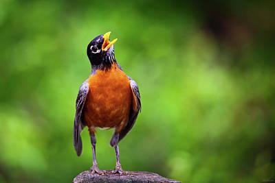 Photograph - North American Robin In Song by Rick Furmanek