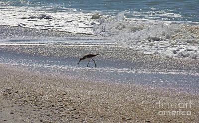 Photograph - North Captiva Beach Bird by Carol McCutcheon