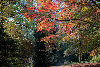 Photograph - North Carolina Autumn Treasure by Dale Powell