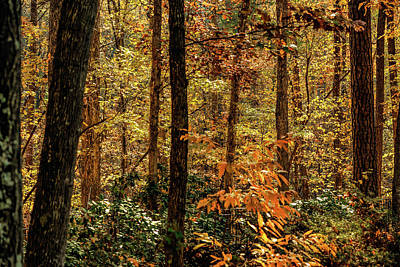 Photograph - North Carolina Fall In The Forest by Jim Moore