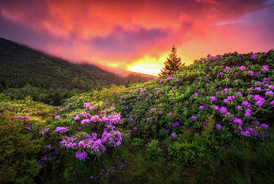 Mountain Royalty-Free and Rights-Managed Images - North Carolina Mountains Outdoors Landscape Appalachian Trail Spring Flowers Sunset by Dave Allen