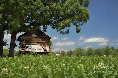 Field Of Crops Photograph - North Carolina Tobacco by Benanne Stiens